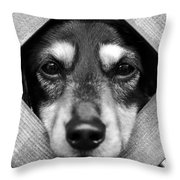 Doberman Puppy In Fence Throw Pillow
