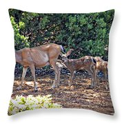Doe And Twin Fawns Throw Pillow