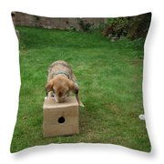 Dog Playing Throw Pillow by Mark Taylor
