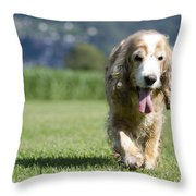 Dog Walking On The Green Grass Throw Pillow