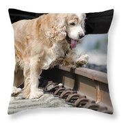 Dog Walking Over Railroad Tracks Throw Pillow