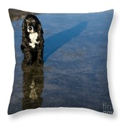 Dog With Reflections And Shadow Throw Pillow