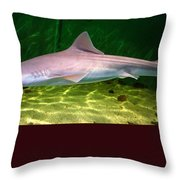 Dogfish Shark In Aquarium Throw Pillow