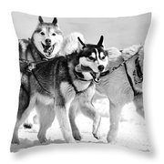 Dogs Leashed To A Chariot Throw Pillow