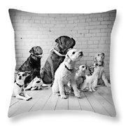 Dogs Watching At A Spot Throw Pillow