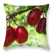 Dogwood Cornus Mas Berries Throw Pillow