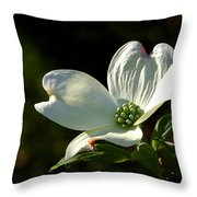 Dogwood Bloom At Sunrise Throw Pillow
