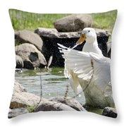 Doin The Duck Splash Throw Pillow