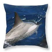 Dolphin Escort Throw Pillow