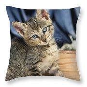 Domestic Cat Felis Catus Kitten, Germany Throw Pillow