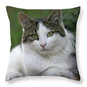 Domestic Cat Felis Catus Portrait Throw Pillow