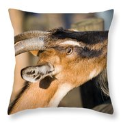 Domestic Goat Throw Pillow