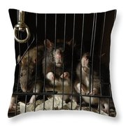 Domestic Rats At The George M. Sutton Throw Pillow