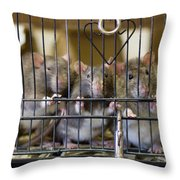 Domestic Rats At The Sutton Avian Throw Pillow