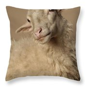 Domestic Sheep Throw Pillow