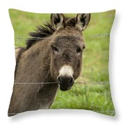 Donkey - The Beast Of Burden Throw Pillow