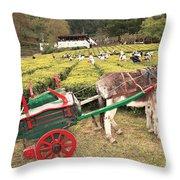 Donkey And Tea Gardens Throw Pillow