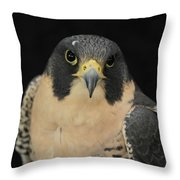 Don't Flinch... I Am Looking At You Throw Pillow