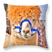 Don't Hate Me Cuz I Am Beautiful Throw Pillow