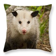 Don't Mess With Me Opossum Throw Pillow