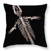 Dorudon Skeleton Throw Pillow