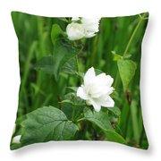 Double Jasmine In Bloom Throw Pillow