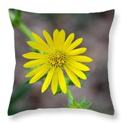 Double Lemon Zested Throw Pillow