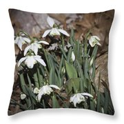 Double Snowdrops Squared Throw Pillow