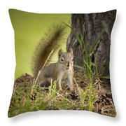 Douglas Squirrel Throw Pillow