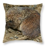 Down Right Dirty Mole Throw Pillow