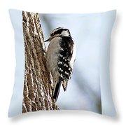 Downy Woodpecker 4 Throw Pillow