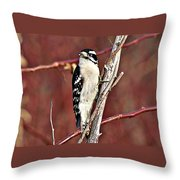 Downy Woodpecker 6 Throw Pillow