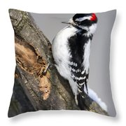 Downy Woodpecker Perched In A Tree Throw Pillow