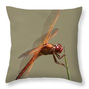 Dragonfly - Dodger Throw Pillow