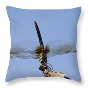 Dragonfly - Handstand Throw Pillow
