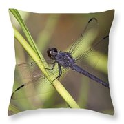 Dragonfly - Little Boy Blue Throw Pillow