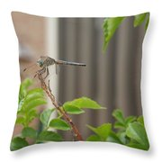 Dragonfly In Nature Throw Pillow