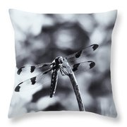 Dragonfly In The Sun Throw Pillow