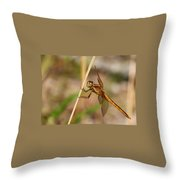 Dragonfly Looking At You Throw Pillow