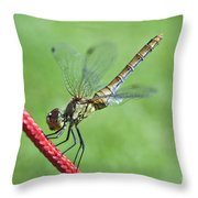 Dragonfly On A String Throw Pillow