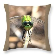 Dragonfly Perspective Throw Pillow by Carol Groenen