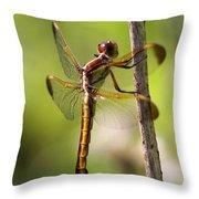 Dragonfly Photo - Yellow Dragon Throw Pillow