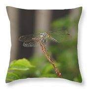 Dragonfly Smile Throw Pillow