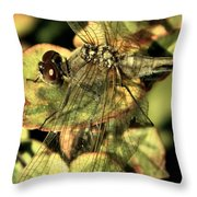 Dragonfly Wingspan Throw Pillow