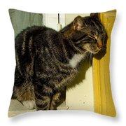 Dreaming Cat Throw Pillow
