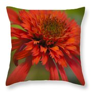 Dreamy Hot Papaya Coneflower Bloom Throw Pillow