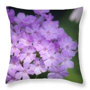 Dreamy Lavender Phlox Throw Pillow