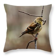 Drenched Finch Throw Pillow