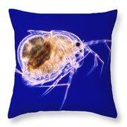 Drepanothrix Throw Pillow