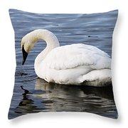 Dribbling Swan Throw Pillow